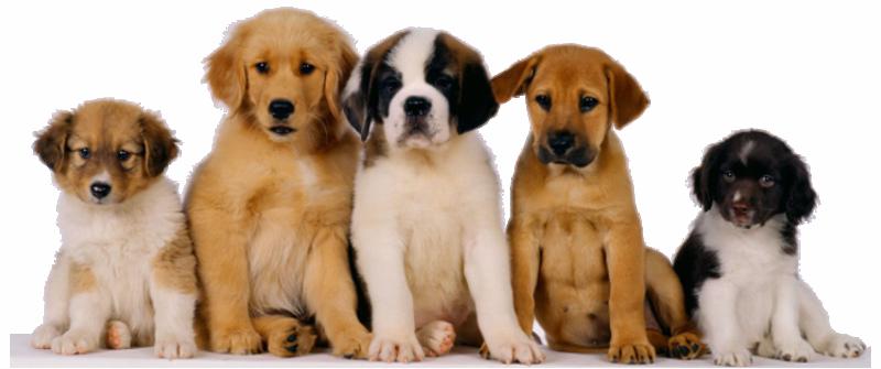 puppy_class_intro