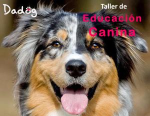 Taller de educación canina