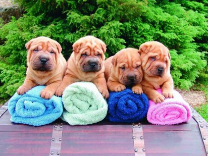socializacion cachorros, imprinting