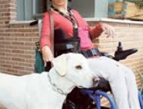 Terapia Asistida con Perros en la Parálisis Cerebral