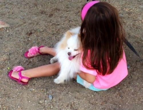 La terapia con animales reduce la dosis de fármacos