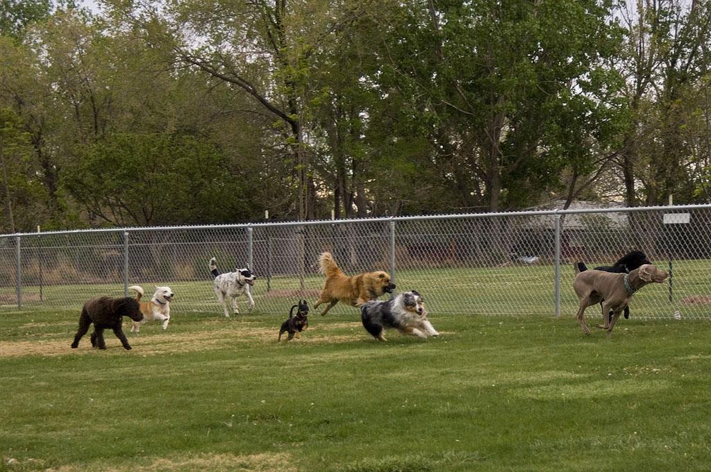perros socializacion, perros, parque de perros