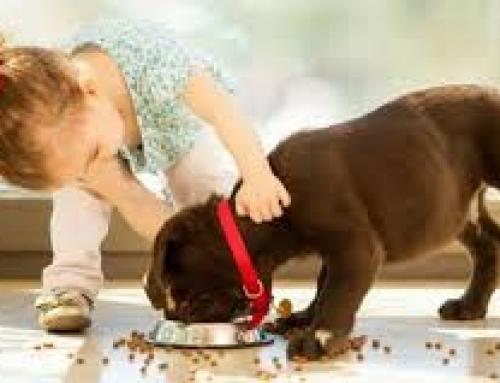 Cómo prevenir mordidas de perro en niños Parte 1: Motivaciones y mitos