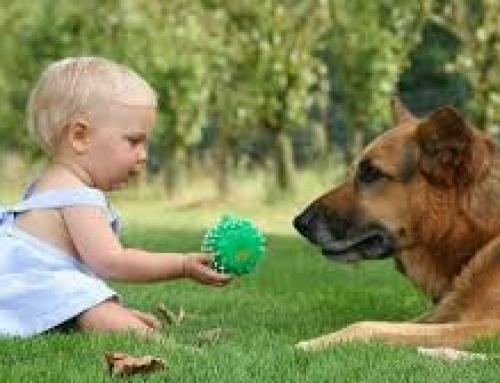 Mitos comunes sobre las interacciones etre perros y niños