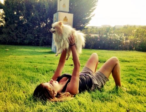5 consejos para el verano perfecto con tu perro