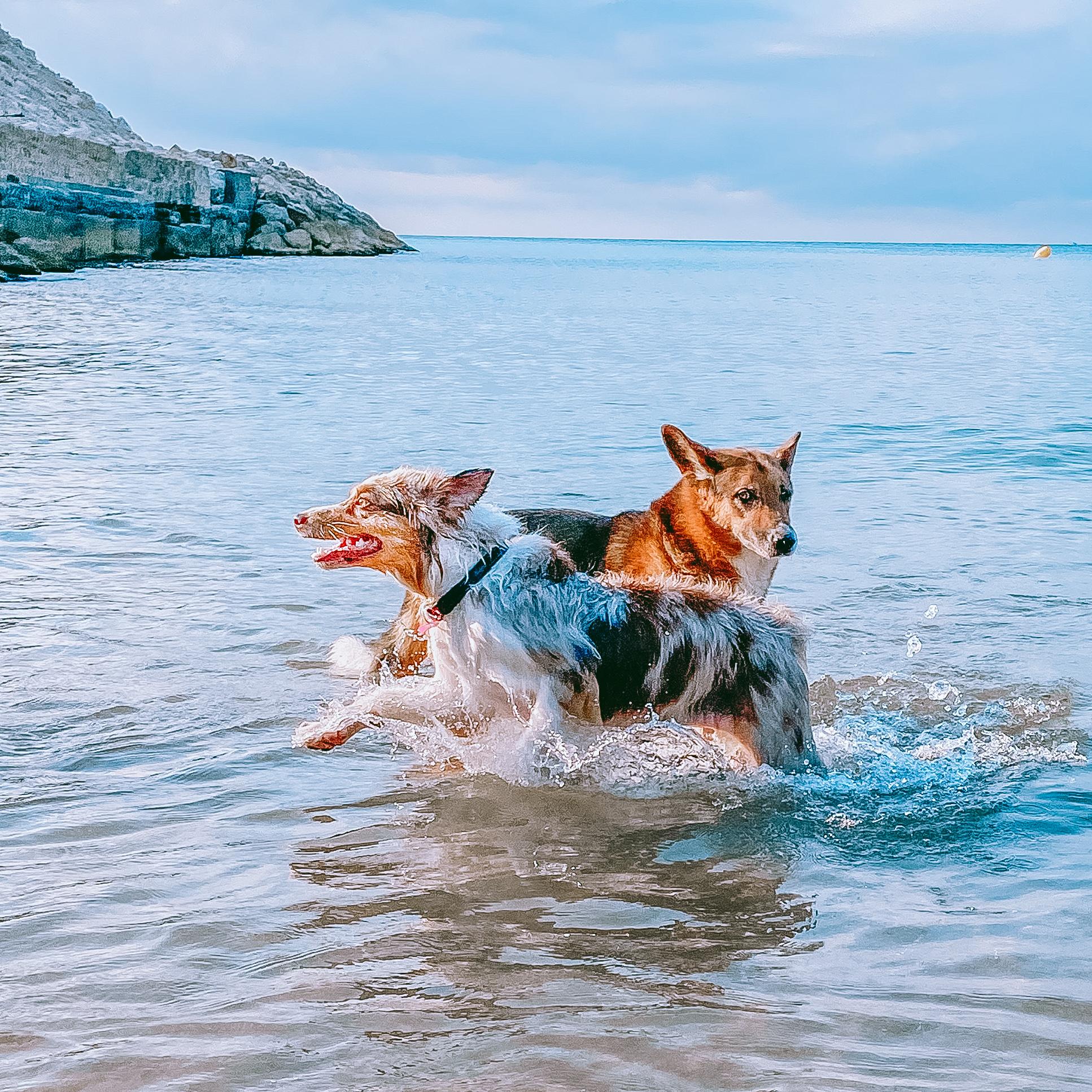 Playa canina en Catalunya